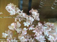 🌸   桜   🌸